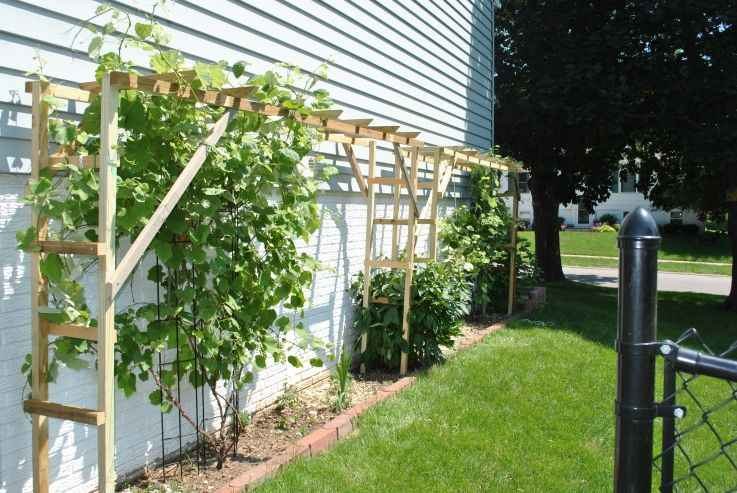 Advice for Vineyard Trellising