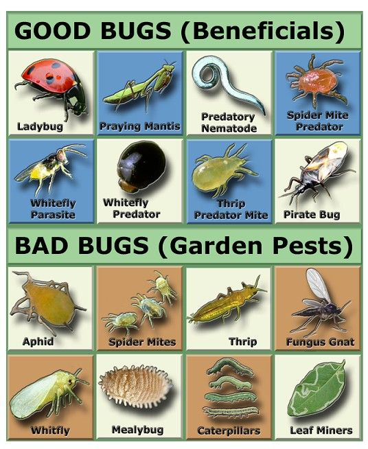 Common Garden Pests and How to Deal with Them