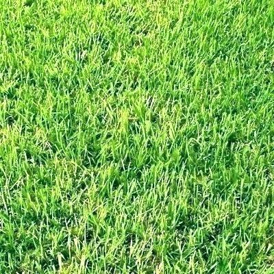 How Much Does Sod Cost?