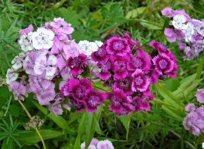 How to Choose Perennials for Your Garden